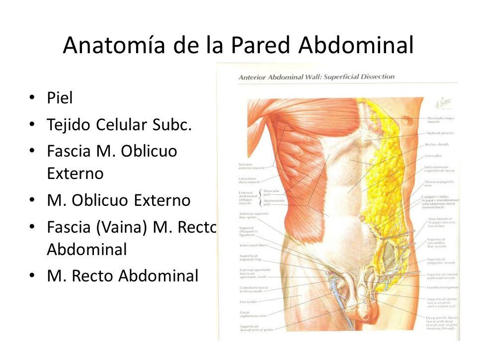 Excelente Pared Abdominal Ppt Anatomía Componente - Anatomía de Las ...