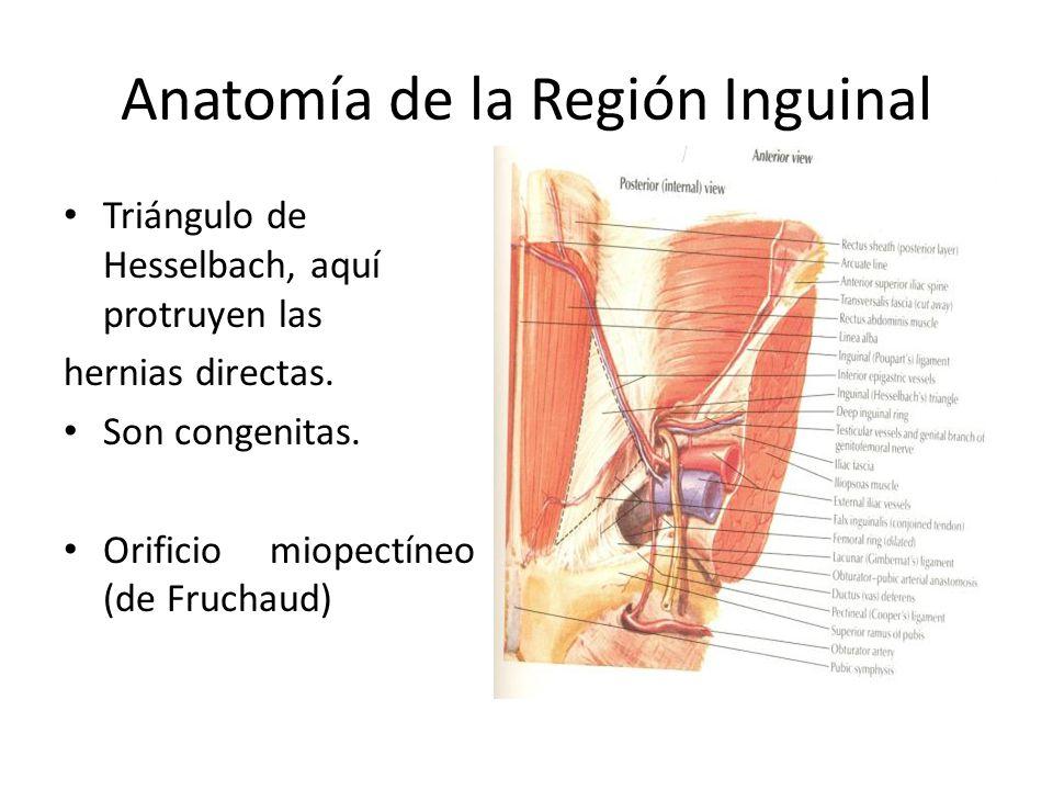 Excelente Anatomía Quirúrgica De La Hernia Inguinal Motivo ...