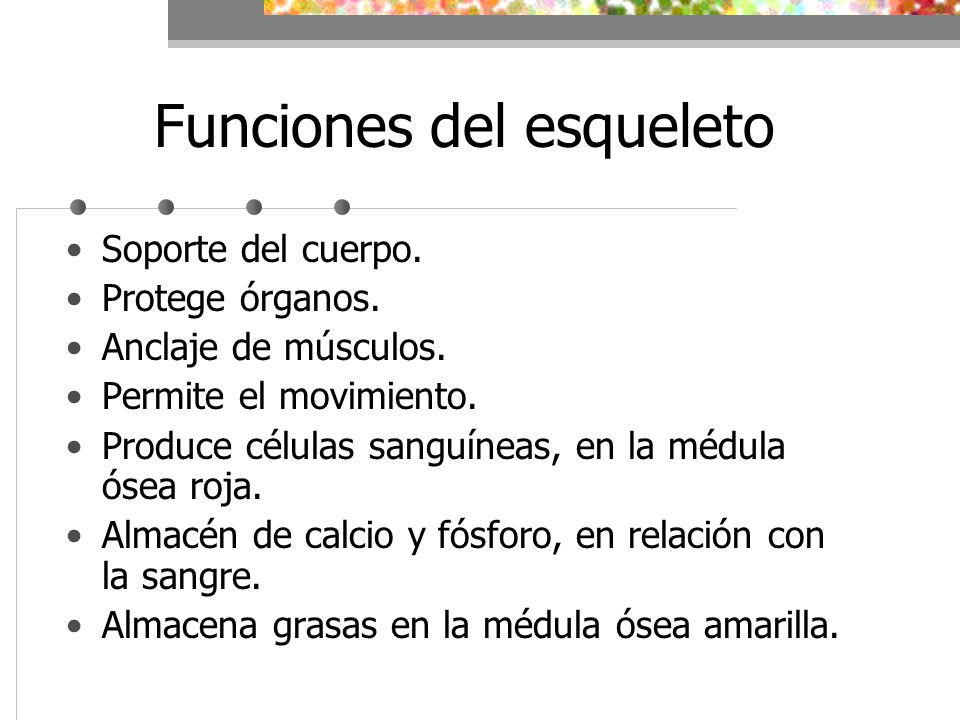 Tema 9: Aparato Locomotor. Los sistemas esquelético y muscular - ppt ...