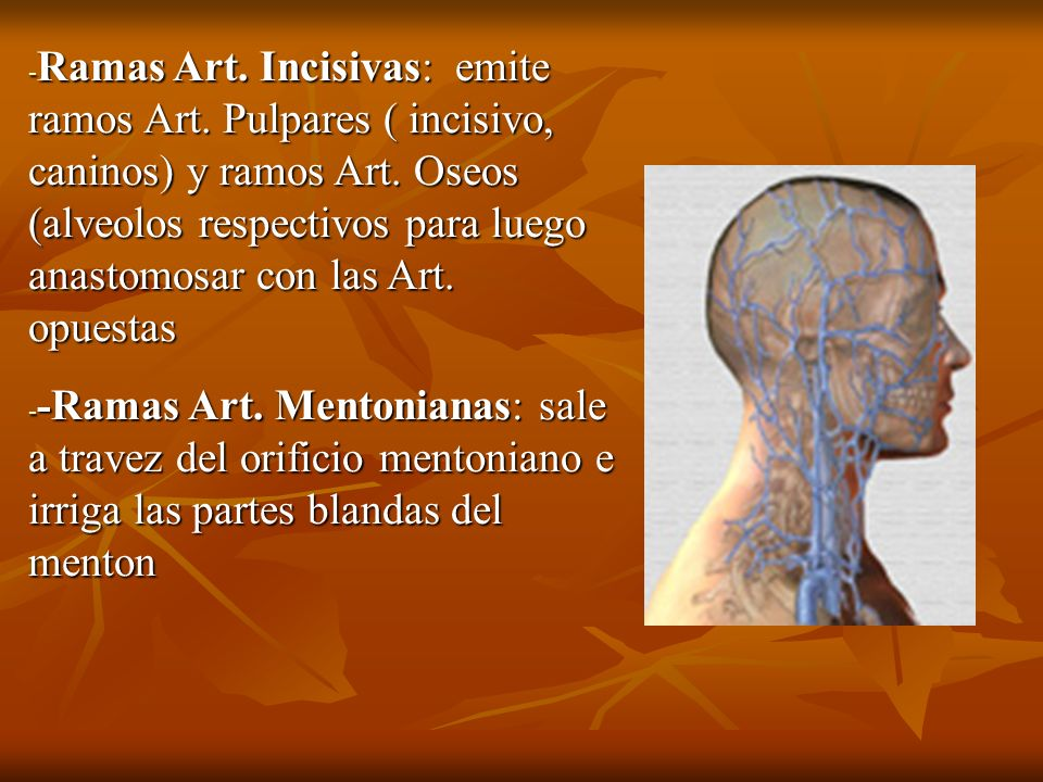 Ramas Art. Incisivas: emite ramos Art