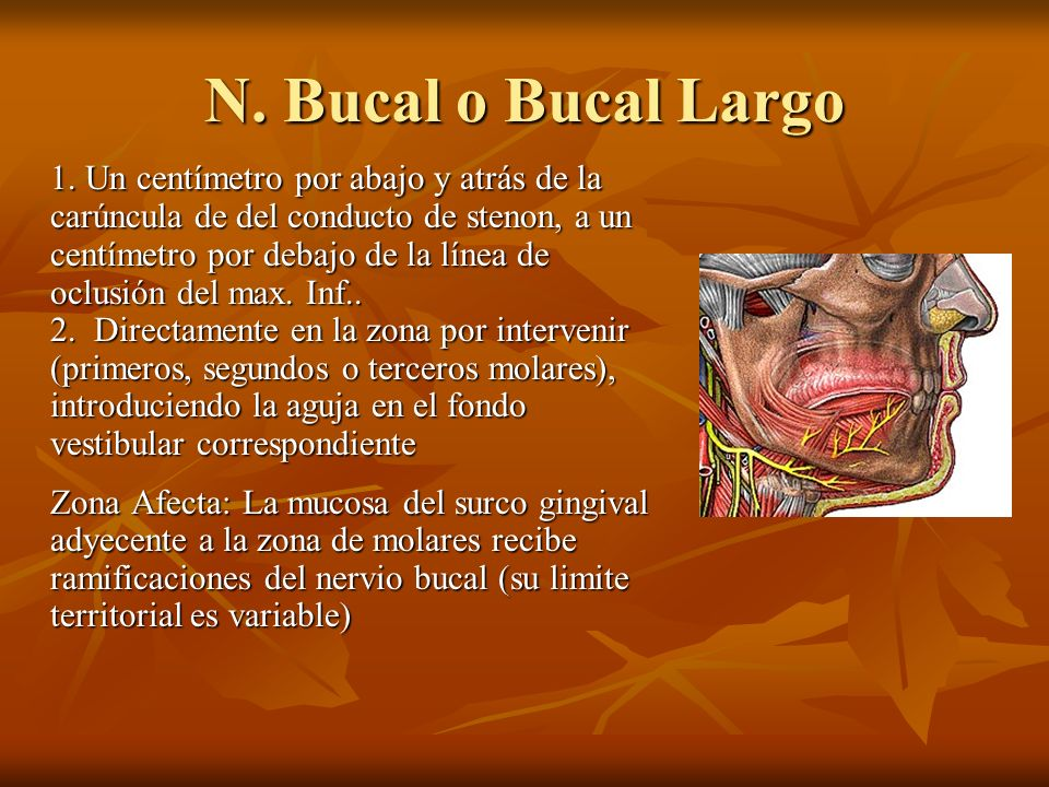 N. Bucal o Bucal Largo