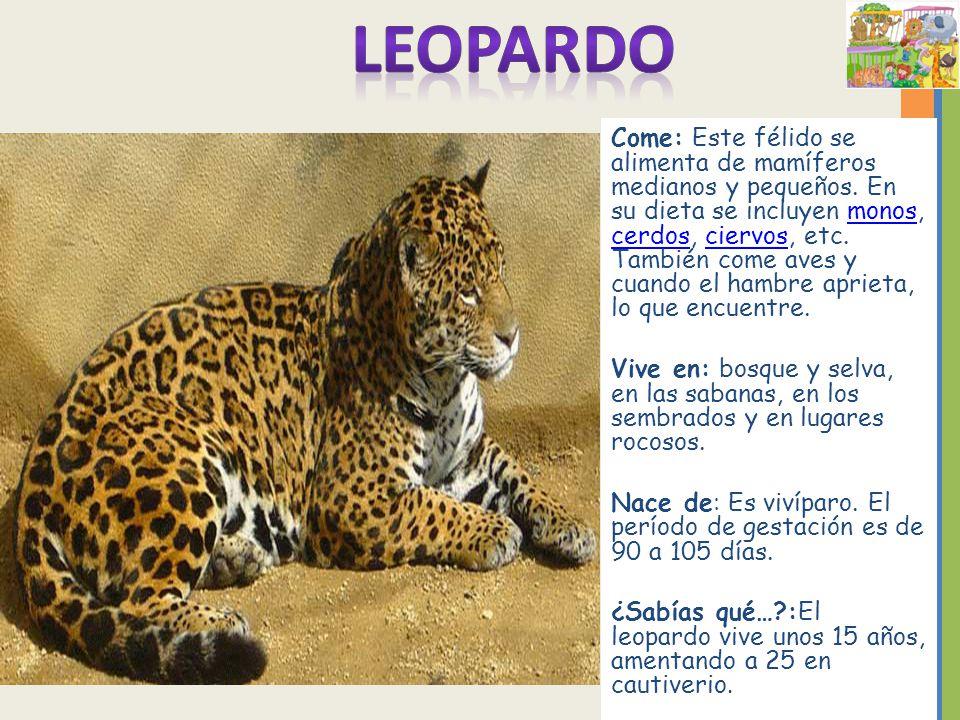 Cómo podemos aprender más acerca de los animales del zoológico ...