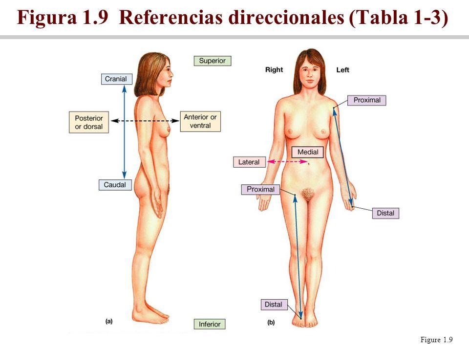 Encantador Términos De Anatomía Del Cuerpo Foto - Anatomía y ...