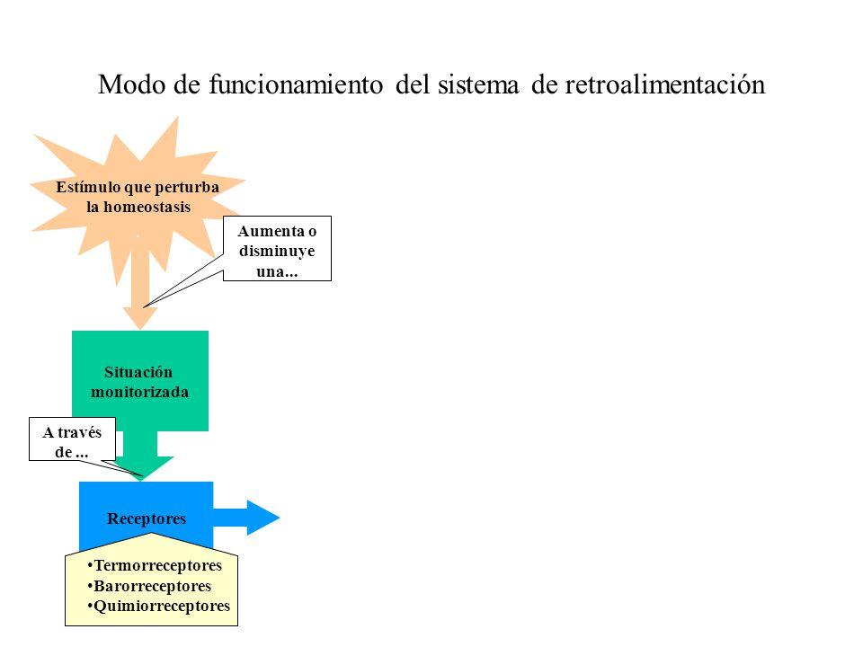 Atractivo Estímulo Definición Anatomía Ornamento - Imágenes de ...