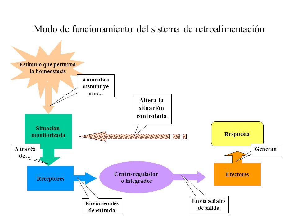 Anatomía La anatomía (ana- de aná, a través, tomía, de tomée, corte ...