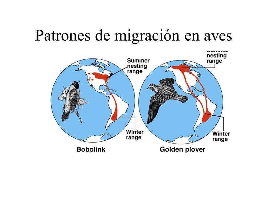 Carácterísticas de las aves - ppt video online descargar