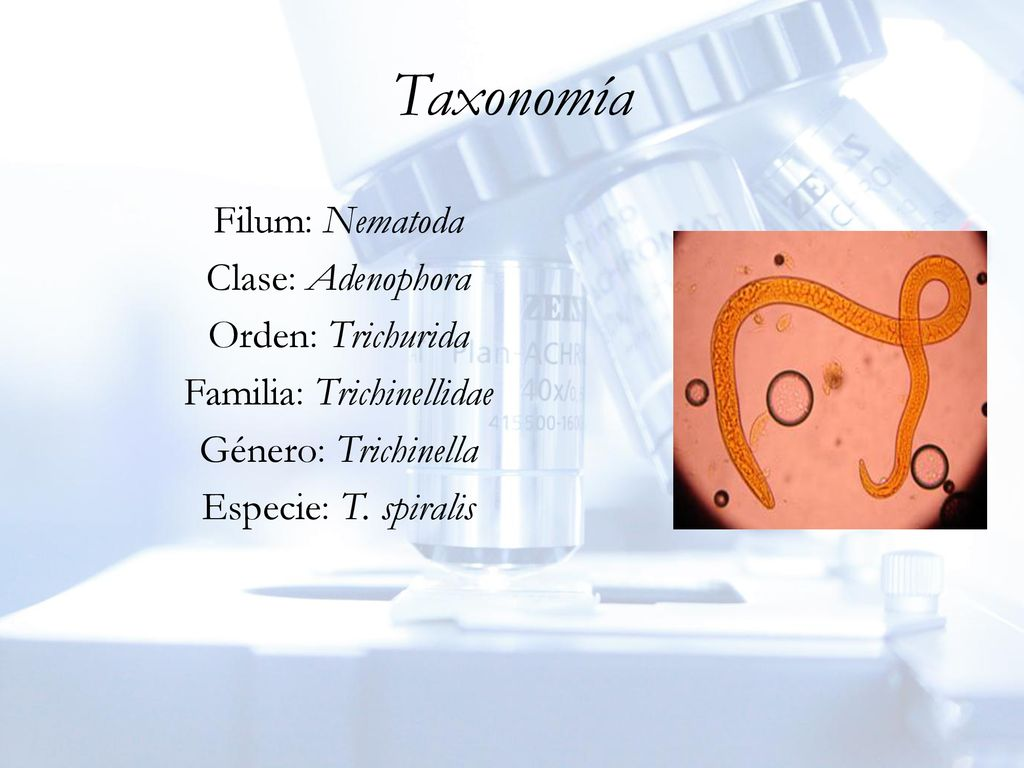Trichinosis férgek kezelése, Trichinella taxonómia