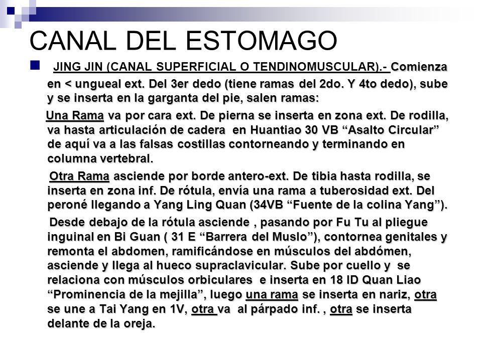 CANAL DEL ESTOMAGO YANGMING DEL PIE - ppt descargar