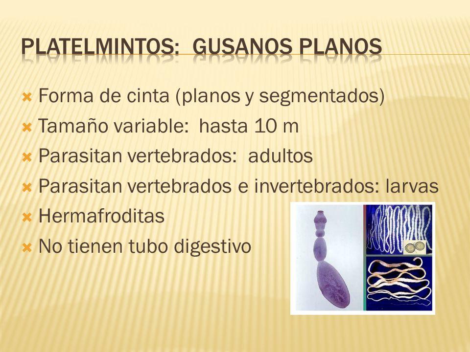 mamifere ppt | clau_bio | Les plathelminthes ppt
