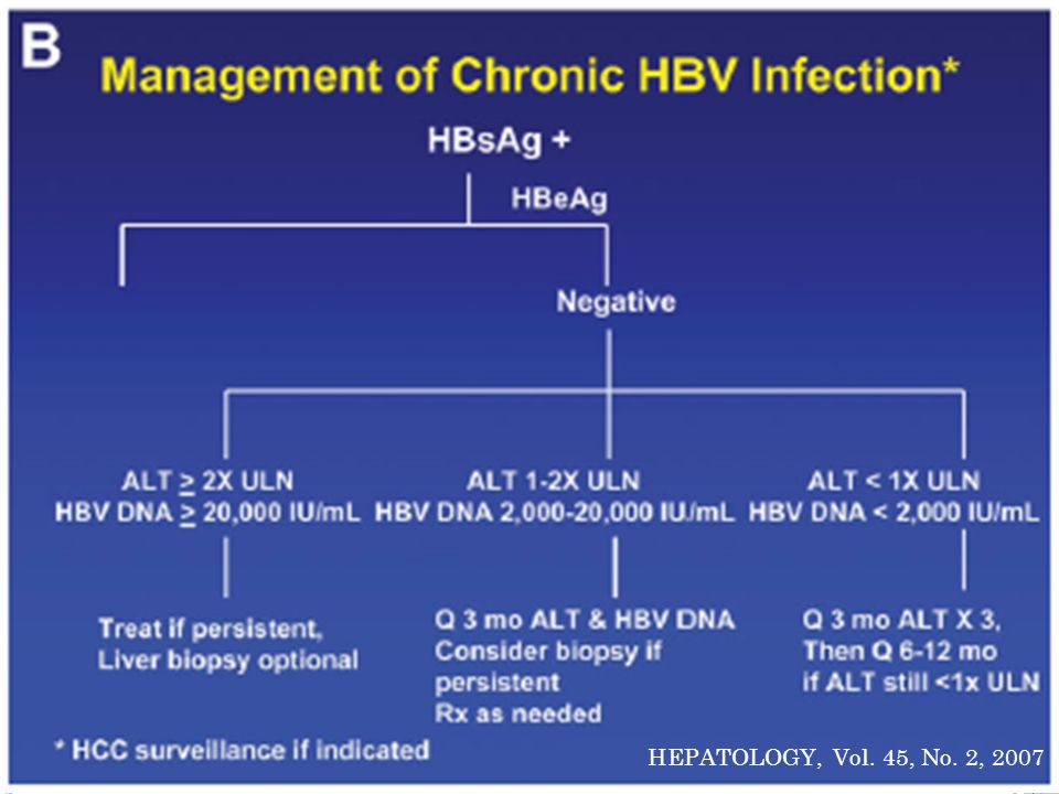 HEPATOLOGY, Vol. 45, No. 2, 2007