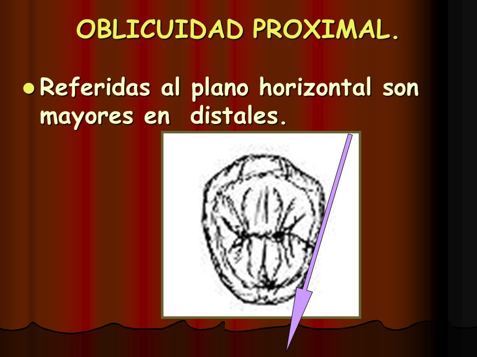 OBLICUIDAD PROXIMAL. Referidas al plano horizontal son mayores en distales.