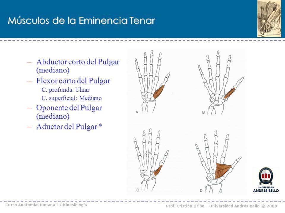 Regiones de Muñeca y Mano - ppt descargar