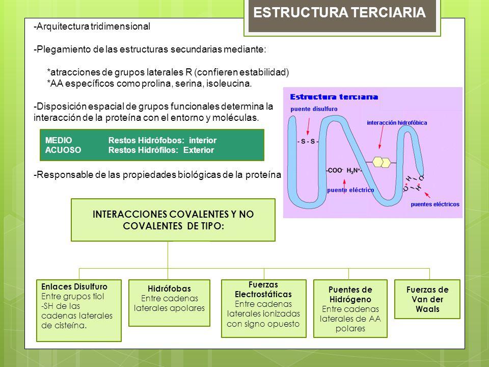 Estructuras Secundarias Terciarias Cuaternarias Y
