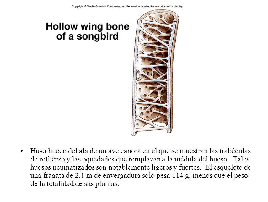 Clase Aves. - ppt descargar