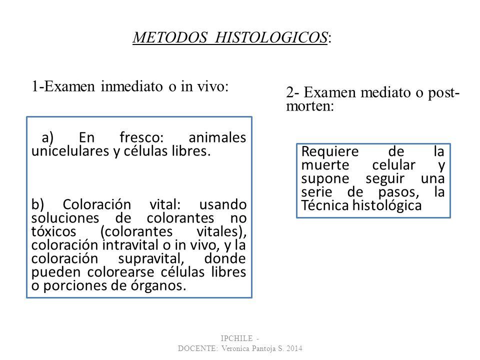 Introducción al estudio de la Histología y Morfología Celular - ppt ...