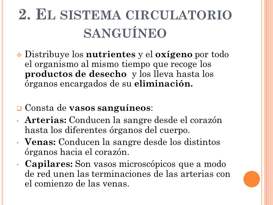 2. El sistema circulatorio sanguíneo
