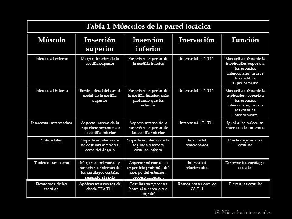 Subtema 1.2 PARED TORACICA Espacios intercostales - ppt video online ...
