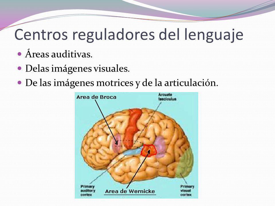 Bases fisiológicas y anatómicas del lenguaje y la comunicación - ppt ...