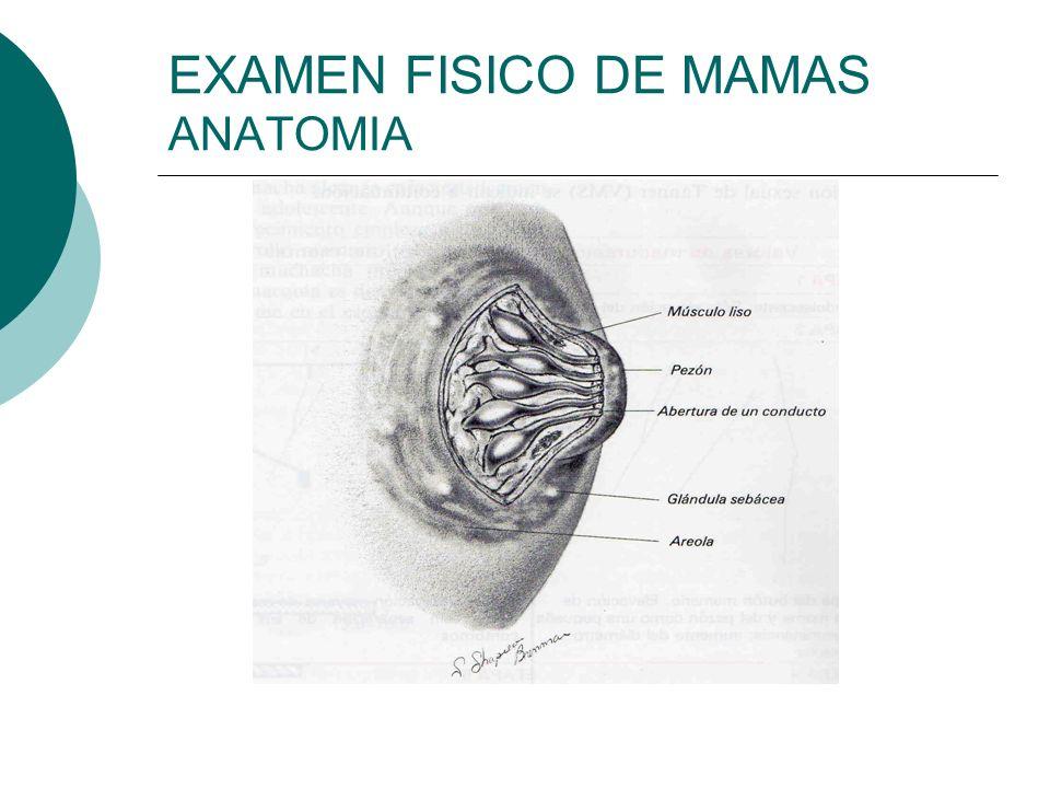 EXAMEN FISICO DE: MAMAS Y AXILA - ppt video online descargar