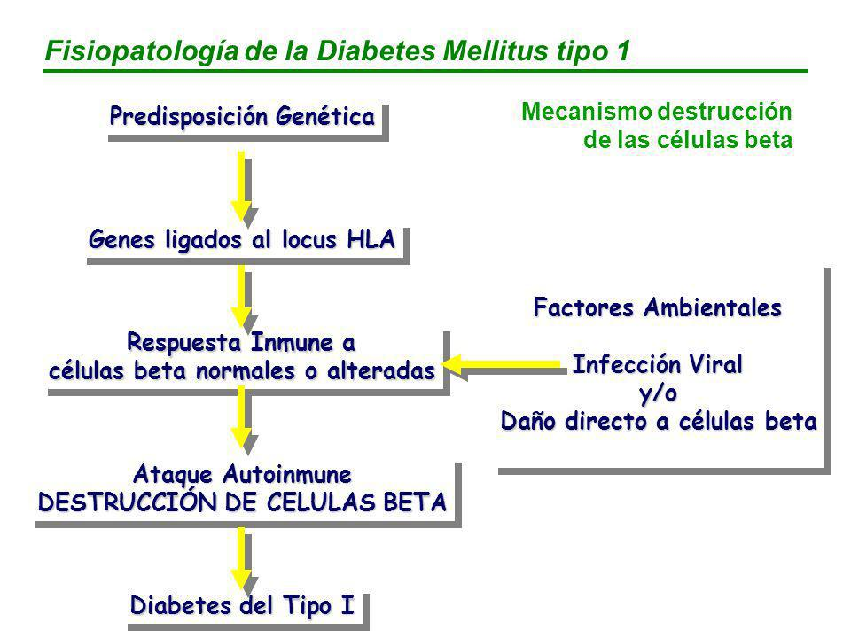 ataque autoinmune en células beta y diabetes