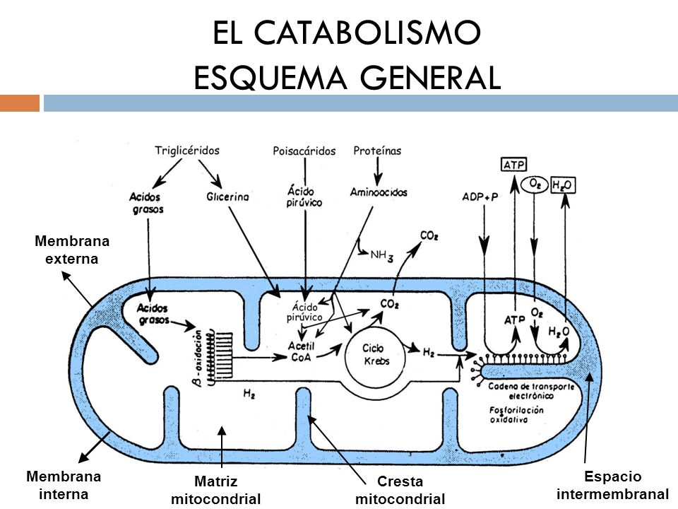 EL CATABOLISMO ESQUEMA GENERAL