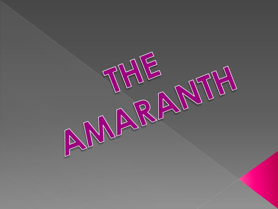 THE AMARANTH 11