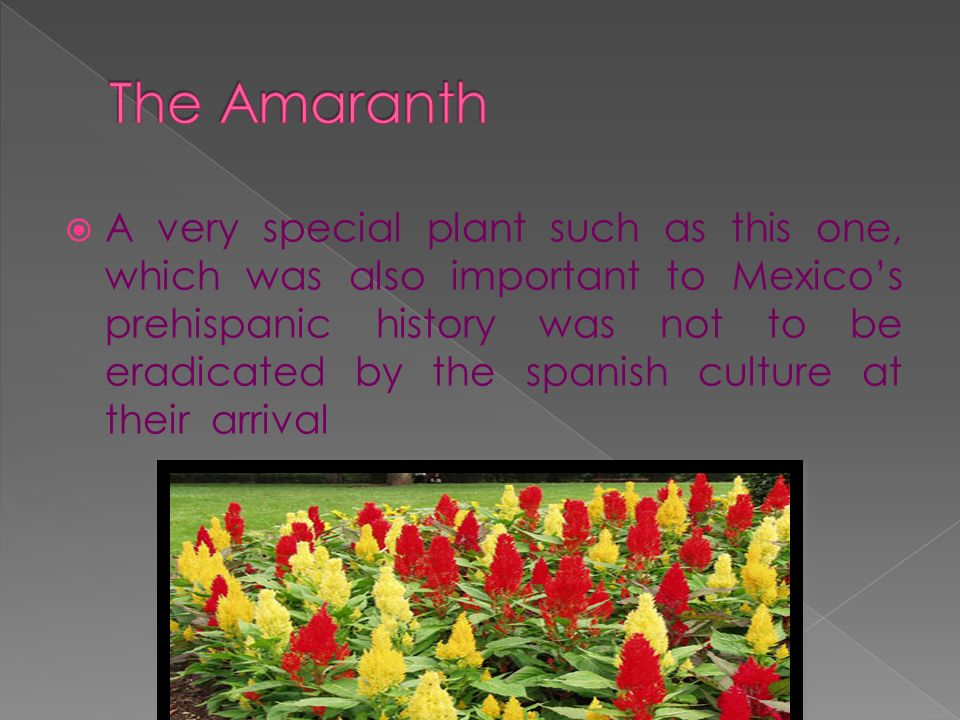 The Amaranth