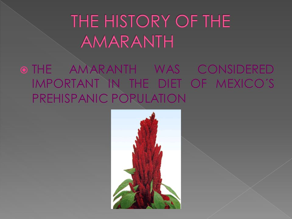 THE HISTORY OF THE AMARANTH