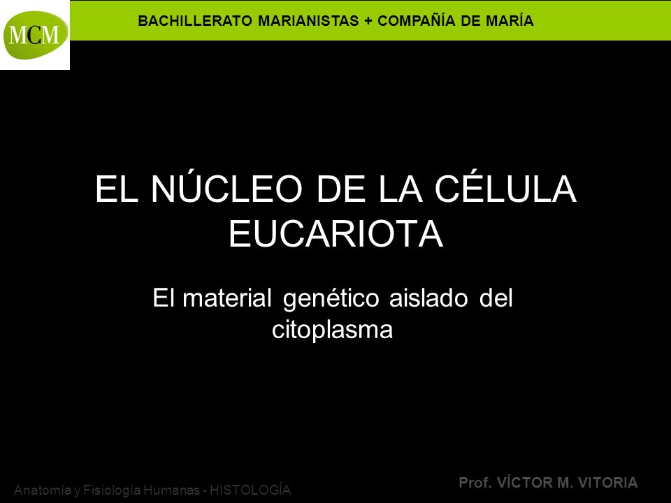 EL NÚCLEO DE LA CÉLULA EUCARIOTA - ppt descargar