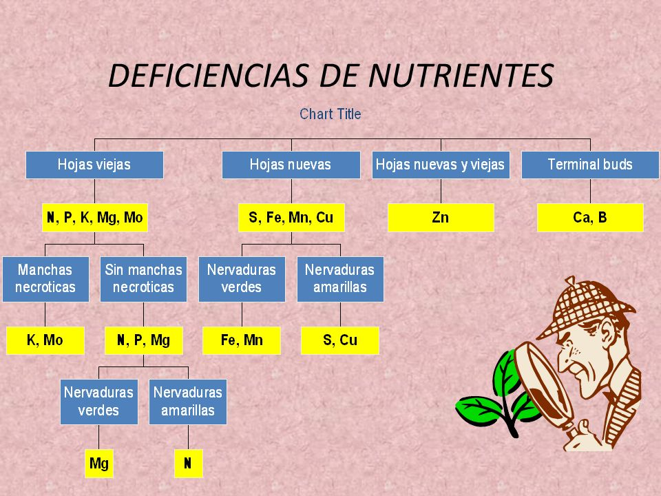 DEFICIENCIAS DE NUTRIENTES