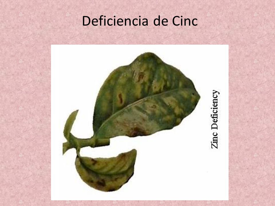 Deficiencia de Cinc