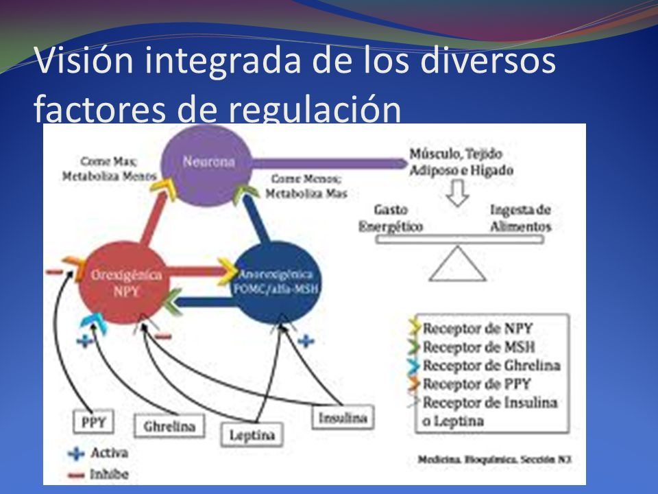 Visión integrada de los diversos factores de regulación