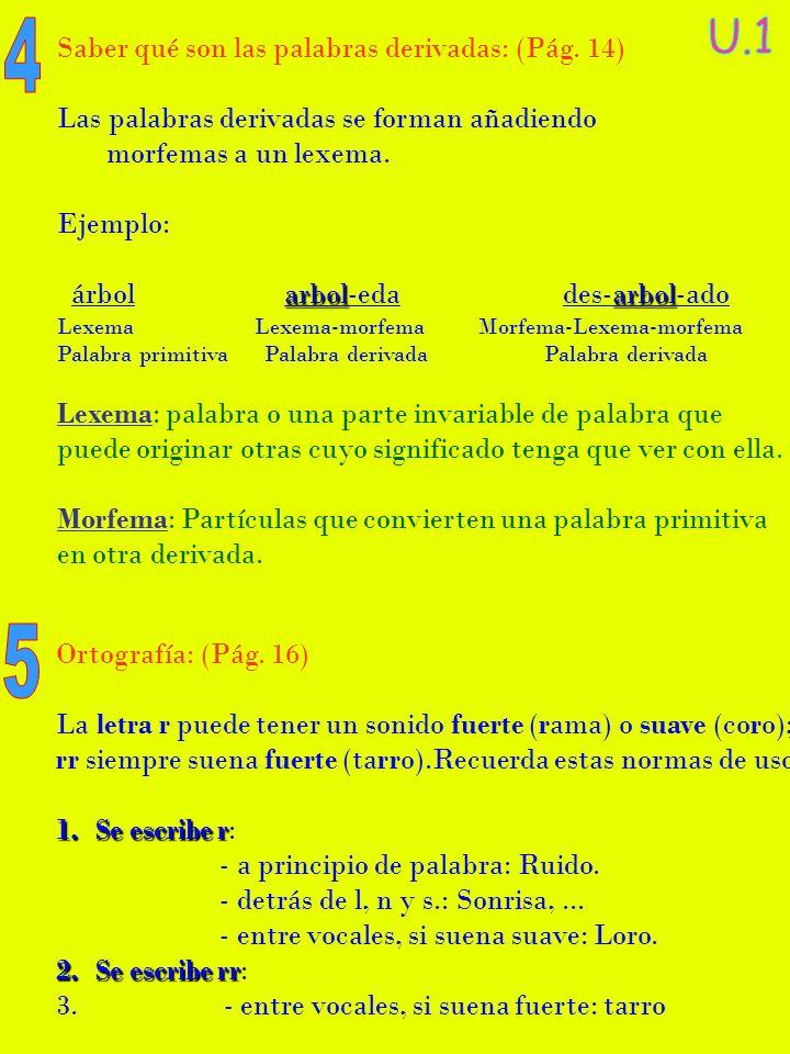 Palabras derivadas de arbol for Significado de la palabra arbol