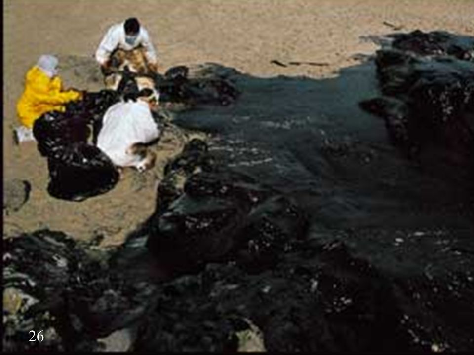 Unfortunately oil arrived the coast