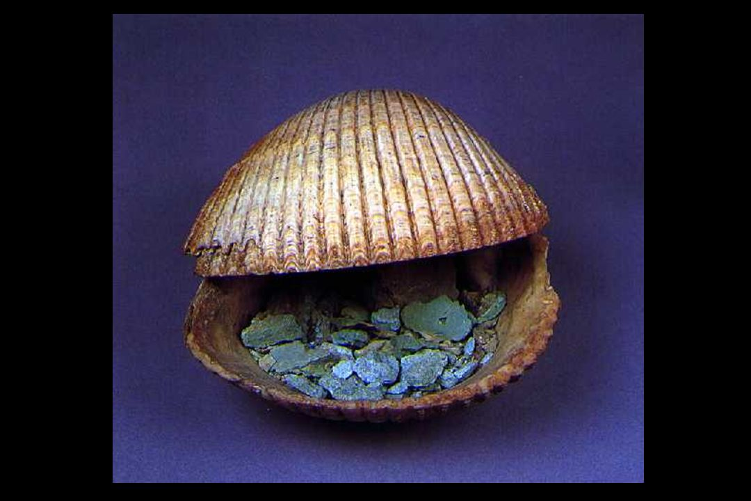 Cosmetic container made of shell with pigment tesoro ur