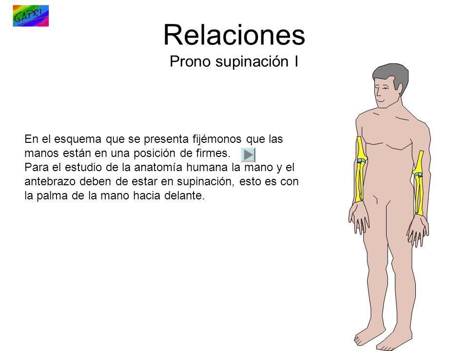 Lujoso Palma De La Mano La Anatomía Festooning - Imágenes de ...