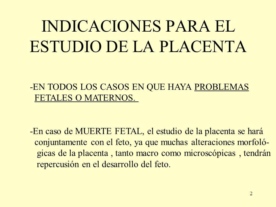 PLACENTA INDICACIONES PARA SU ESTUDIO ANATOMÍA - ppt video online ...