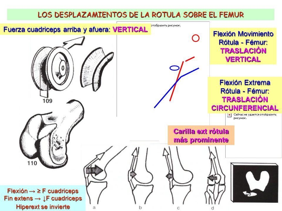 BIOMECÁNICA DE LA RODILLA - ppt video online descargar