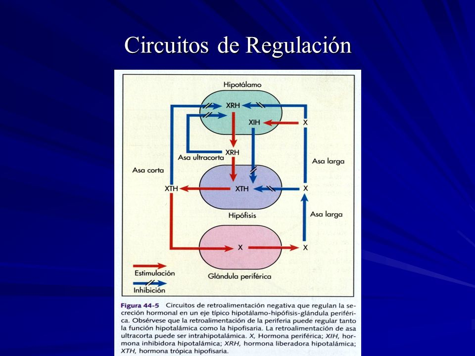 Circuitos de Regulación