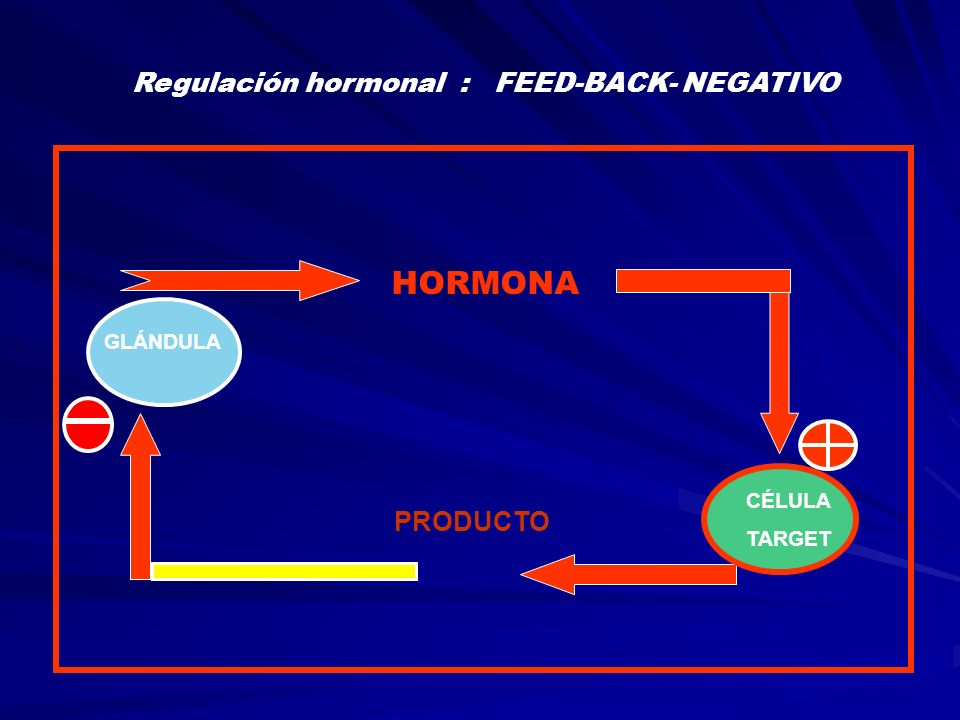 Regulación hormonal : FEED-BACK- NEGATIVO