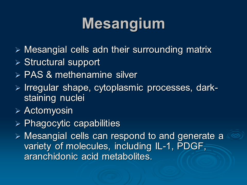 Mesangium Mesangial cells adn their surrounding matrix