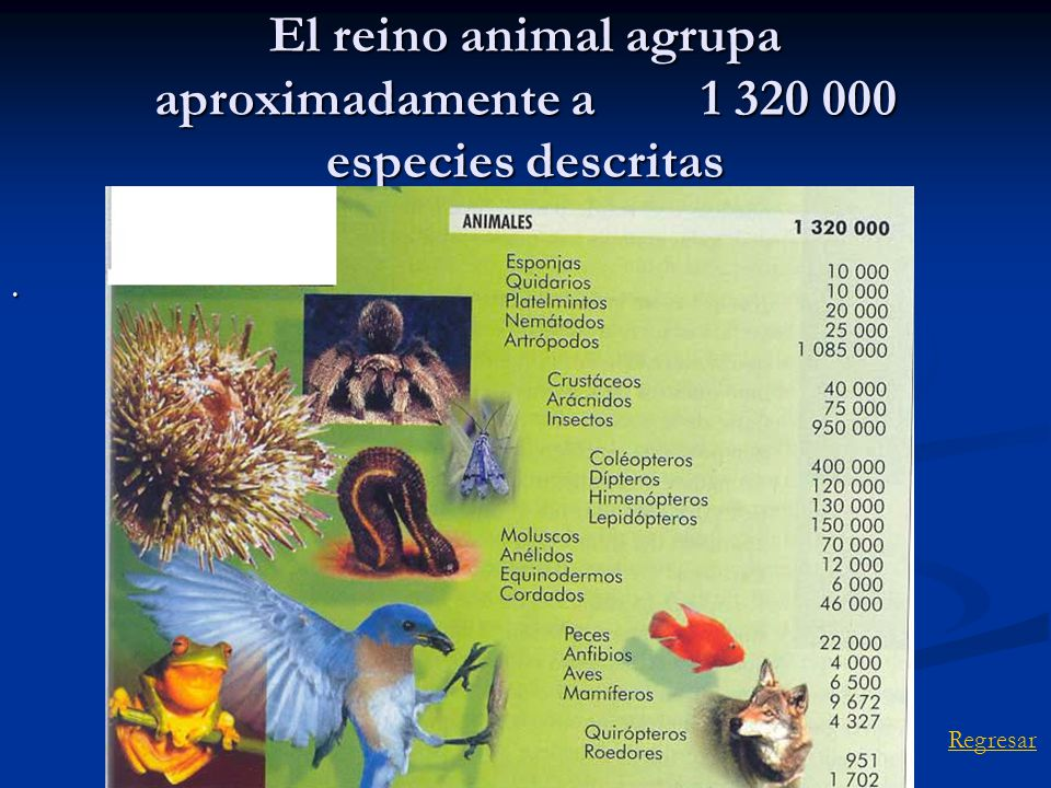 El reino animal agrupa aproximadamente a especies descritas