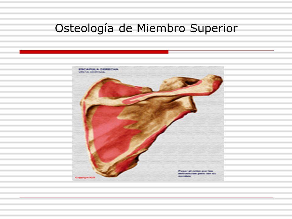 Clase Nº 3 MIEMBRO SUPERIOR - ppt video online descargar