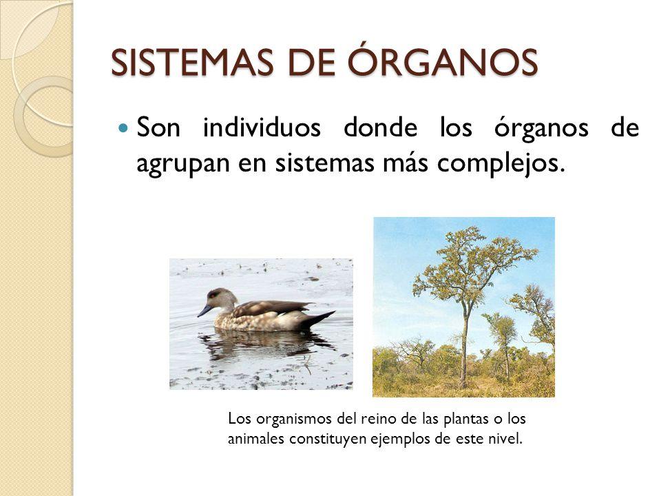 Excepcional Imágenes De Los órganos Y Sistemas Viñeta - Imágenes de ...