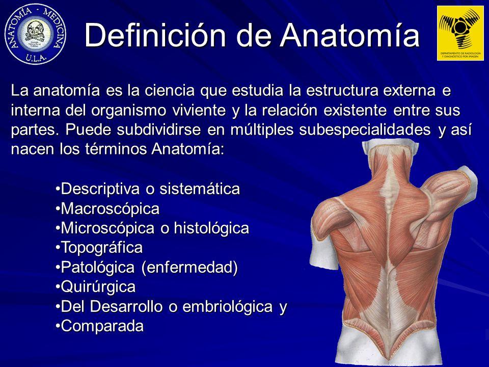 Hermosa Defination De La Anatomía Patrón - Imágenes de Anatomía ...