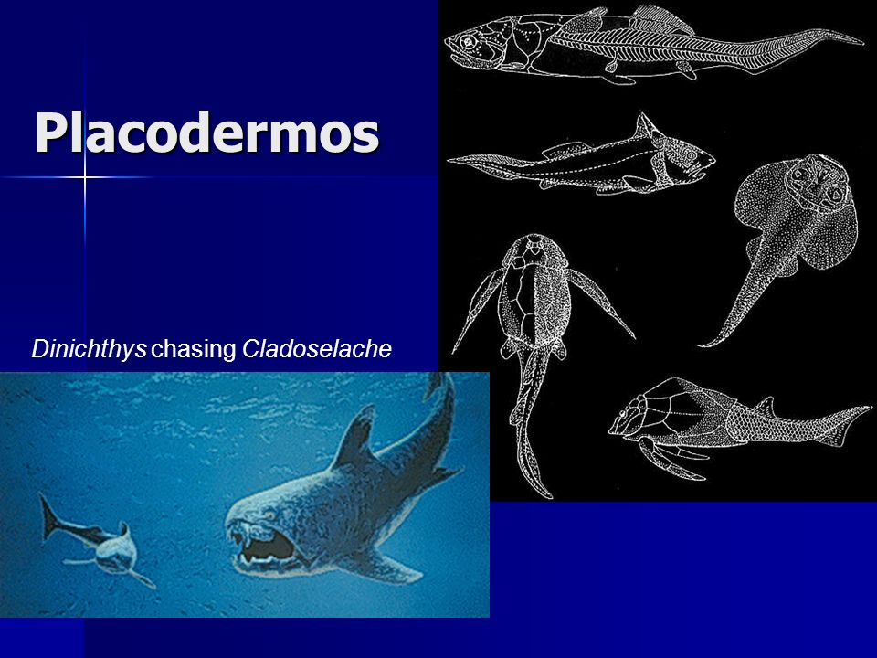 Placodermos Dinichthys chasing Cladoselache