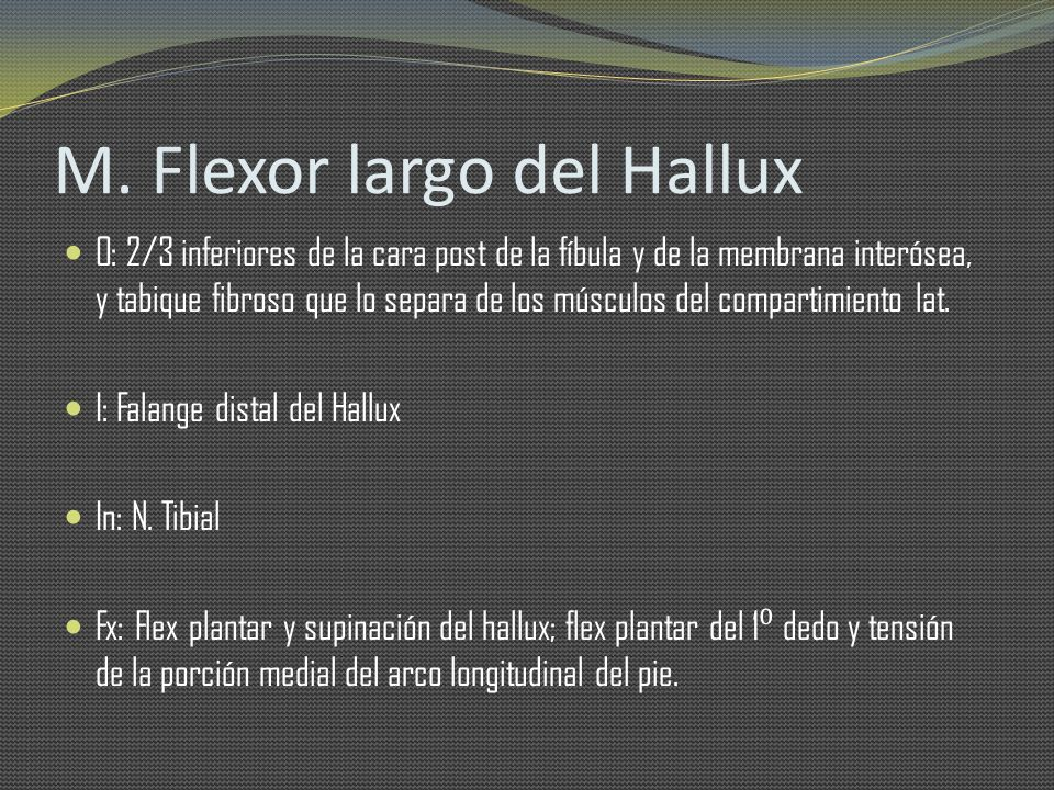 M. Flexor largo del Hallux