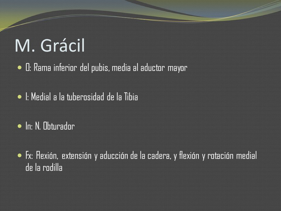 M. Grácil O: Rama inferior del pubis, media al aductor mayor
