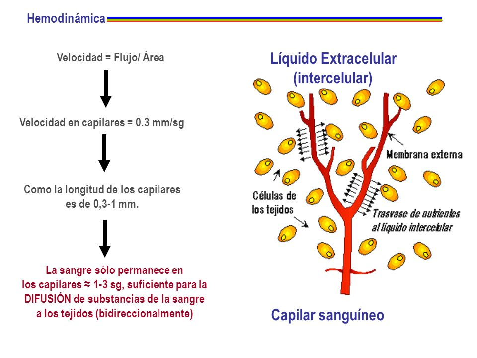 Líquido Extracelular (intercelular)
