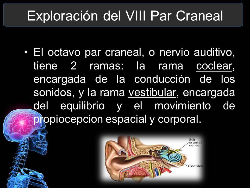 VIII Par Craneal. - ppt video online descargar